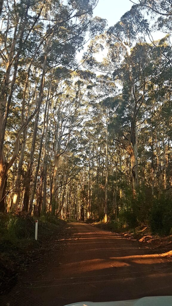 Drive to Mt Frankland